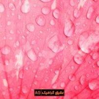 ویدیو فوتیج قطرات باران روی گل شکوفه