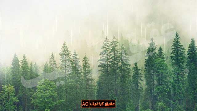 ویدیو فوتیج بارش باران و هوای مه آلود در جنگل