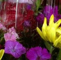 ویدیو فوتیج قطره آب روی گل های رنگارنگ عاشقانه